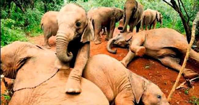 Öksüz filler böyle eğlendi