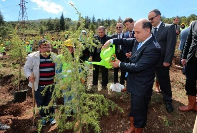 Amasya'da Davutoğlu İçin Hatıra Ormanı Oluşturuldu