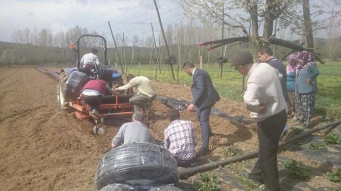 Pazaryeri'nde Çilek Bahçelerinde Çalışmalara Başlanıldı