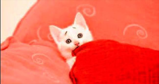 Huysuz kediden sonra endişeli kedi