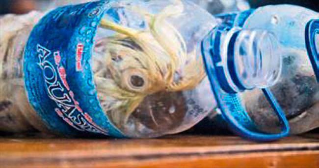 Gümrük kaçağı şişelenmiş papağanlar