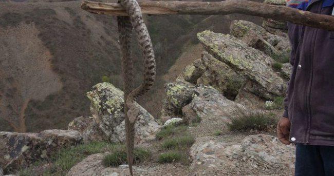 Köyü yılanlar bastı