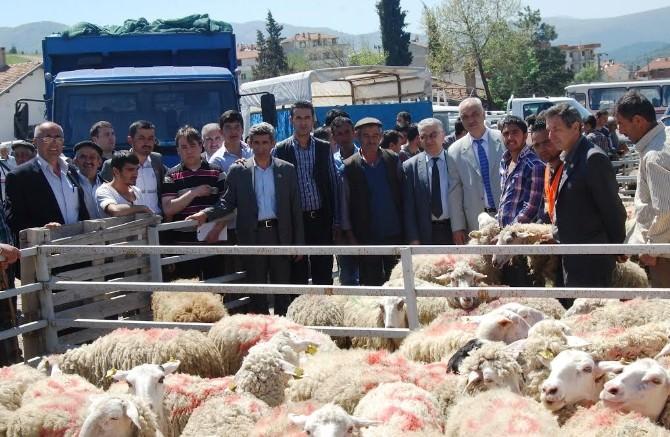 Orhanelili Çiftçilere Ücretsiz Koyun Dağıtıldı