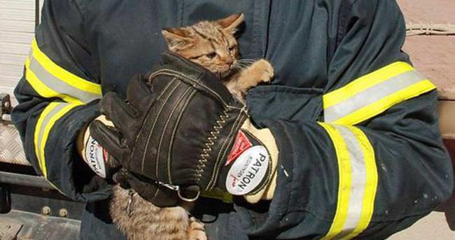 Yavru kedilerin imdadına itfaiye ekipleri yetişti