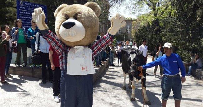 İnek Bayramı'nda inek krizi