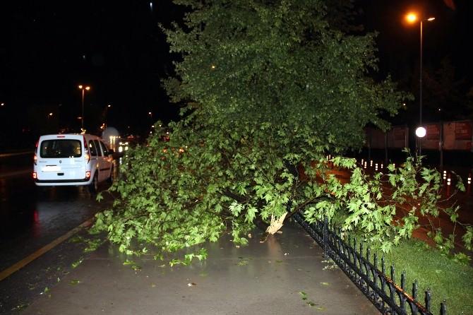 Yalova'da Fırtına Ve Sağanak Yağış