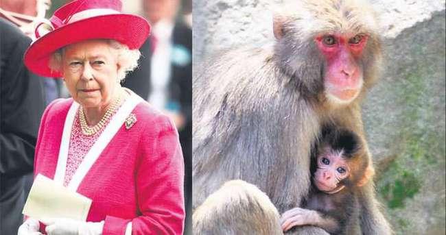 Kraliçe II. Elizabeth, maymunun ismini duyunca çıldırdı