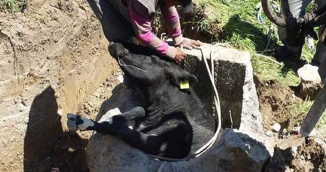 Kuyuya düşen inek için itfaiye ekipleri seferber oldu