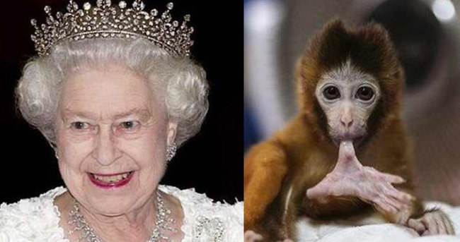 Maymun Charlotte krize neden oldu