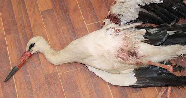 Yaralı leyleğin imdadına belediye ekipleri yetişti
