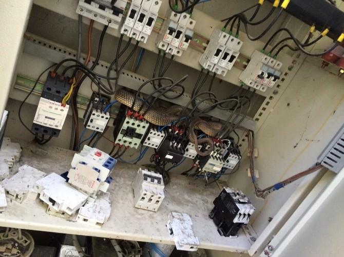 Elektrik Trafosu'ndan 2 Metrelik Yılan Çıktı