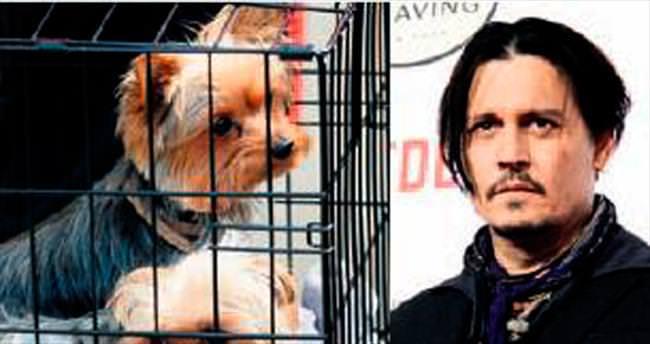 Depp'in köpekleri sınır dışı edildi