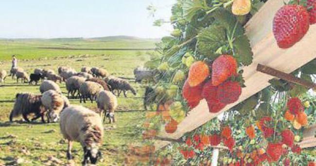 Güneydoğu'da 420 köye 46 milyon lira destek
