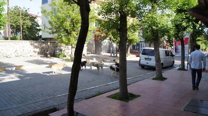 Kağızman'da Başıboş Köpekler Tehlike Oluşturuyor
