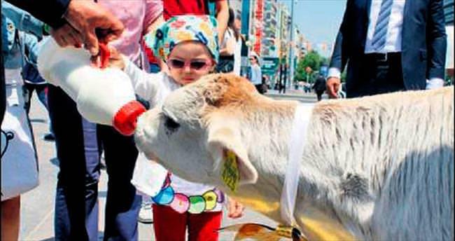 Ankaralılar süte doydu