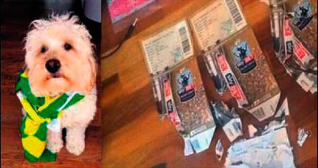 Köpeği final biletini yiyen taraftara jest!