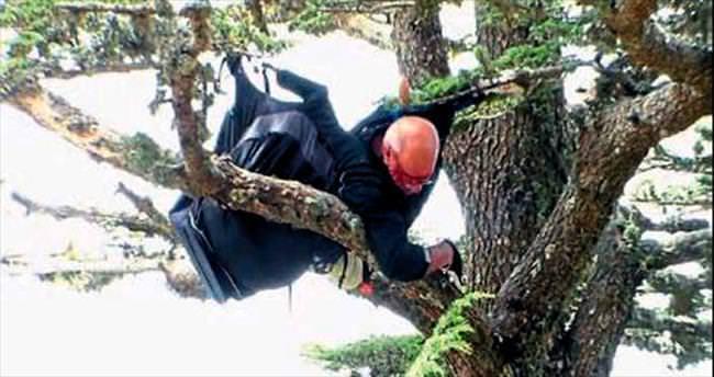 Alman paraşütçü ağaca kondu