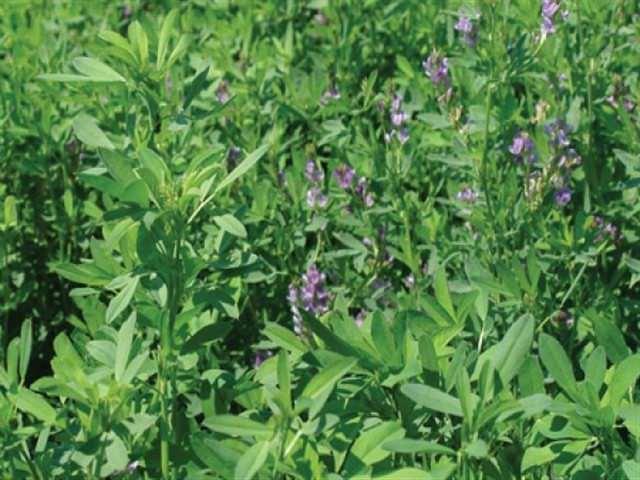 Çaycuma'da Yem Bitkileri Tohumu Dağıtımı Yapıldı