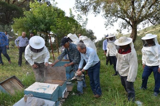 Manisa'da Arı Yetiştiriciliği Kursuna Yoğun İlgi