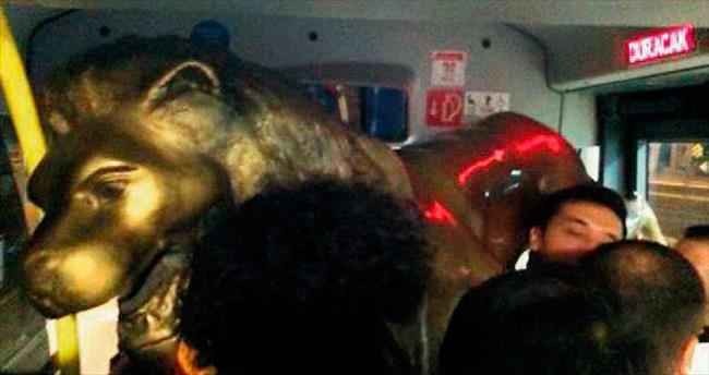 Aslanı metrobüsle kaçırdılar