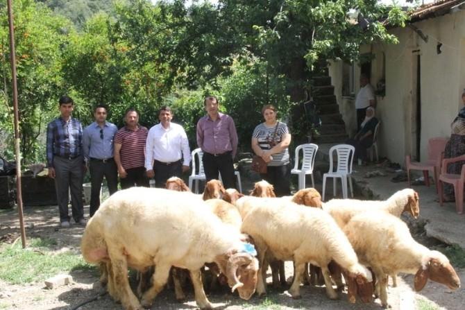 Antakya'da Koyun Yetiştiriciliği Projesi