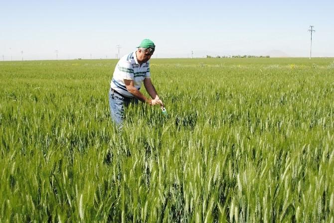 Karaman'da Süneyle Mücadele Çalışmaları