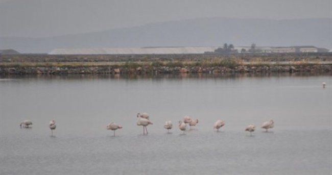 Su kuşları İzmir'de üreyecek