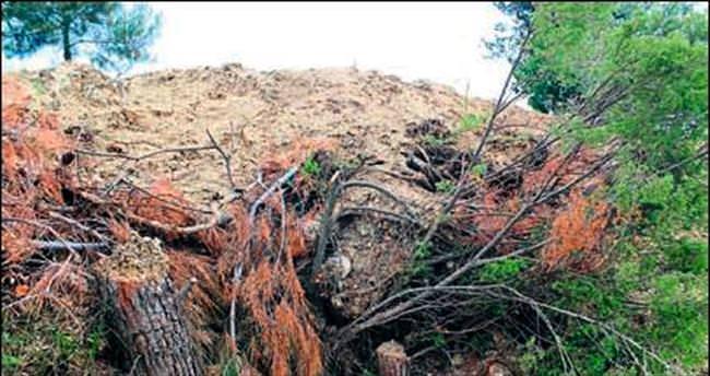 Kemalpaşa'da 110 çam tarla açmak için kesildi