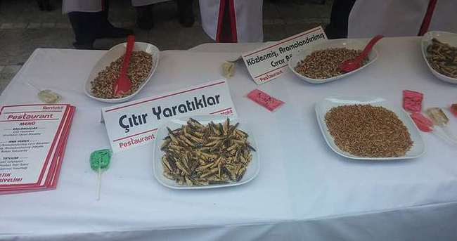 Kadıköy'de böcek stantı açtılar!