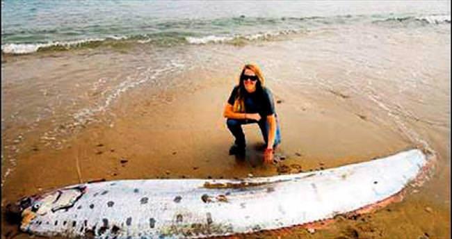4 metrelik kürek balığı kıyıya vurdu