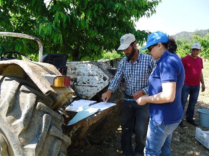 Kiraz Ağaçlarında Eküy Projesi Kapsamında Analiz