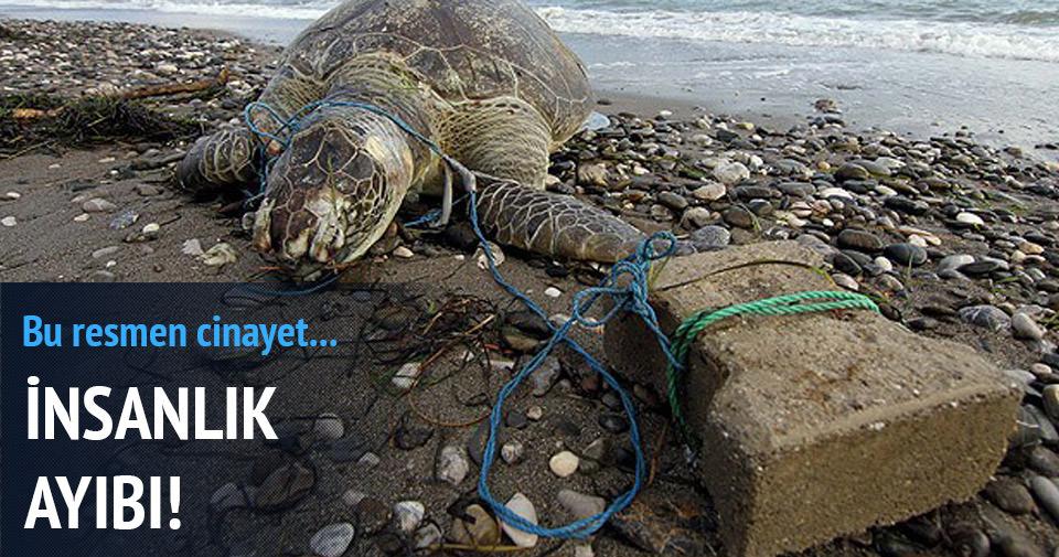 Parke taşı bağlanan deniz kaplumbağası telef oldu