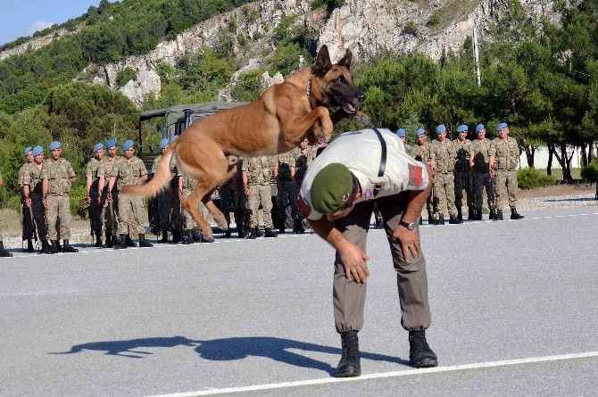Jandarmanın Akıllı Köpeklerinden Gösteri