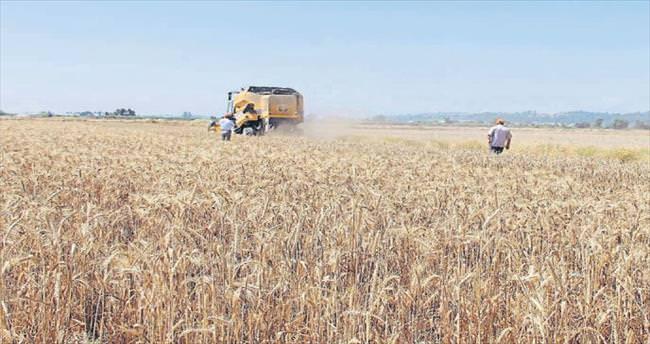 Antalya buğdayında 12 tür hasat edildi