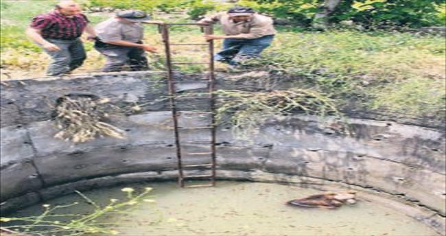 Merdiven ile ayı kurtarma operasyonu