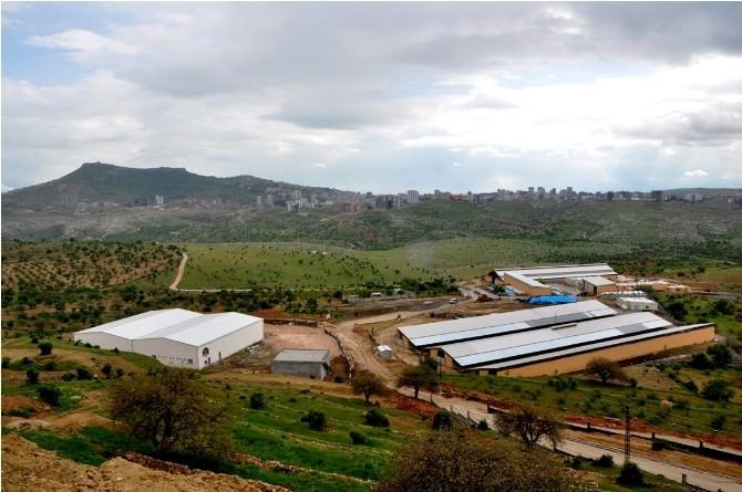 Mardin'de Yeni Bir Süt İşleme Merkezi Kuruluyor