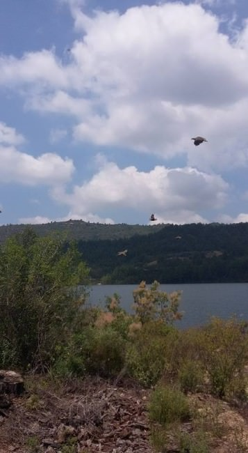 Manavgat'ta 500 Keklik Doğa İle Buluştu