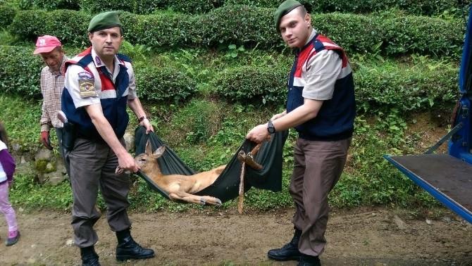 Jandarmadan Yaralı Karacaya Şefkat Eli