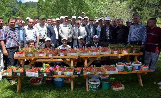 Domaniç'te Çilek Festivali