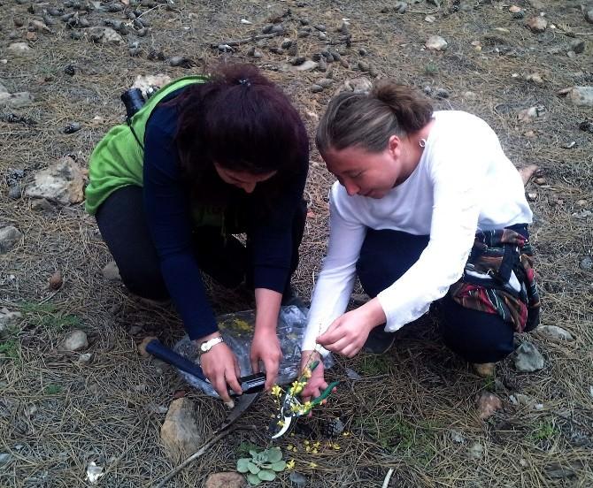 Muğla Ve Aydın'ın Endemik Bitki Haritası Çıkarılıyor