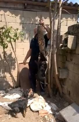 Kırklareli'deki Kedi İşkencesinde Kovuşturmaya Yer Yok