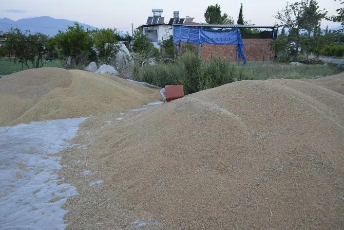 Buğday Üreticisi Dert Küpü