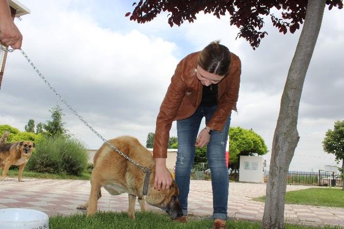 (Özel Haber) Yabancı Gelinin Köpek Sevgisi