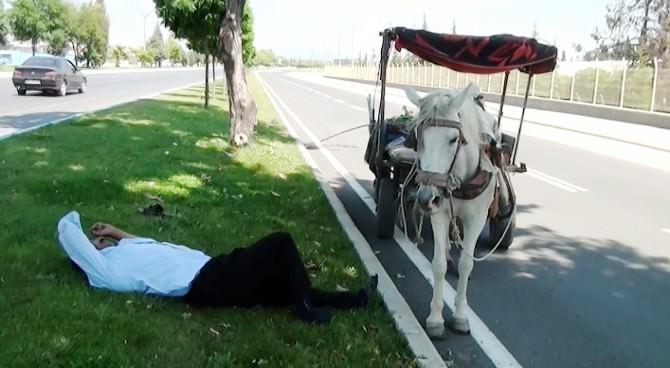 (Özel Haber) Sıcaktan Etkilenen Seyyar Satıcı Yol Ortasında Uyudu
