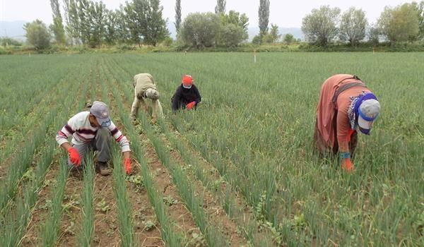 Mevsimlik Tarım İşçilerine Tarım, Beslenme Ve Bebek Bakımı Eğitimi