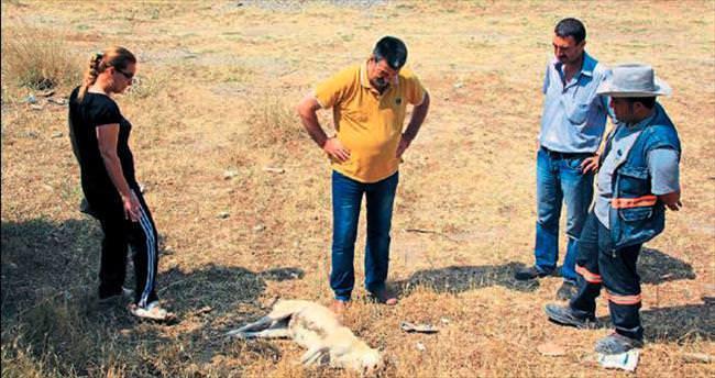 23 köpek zehirlenerek öldürüldü
