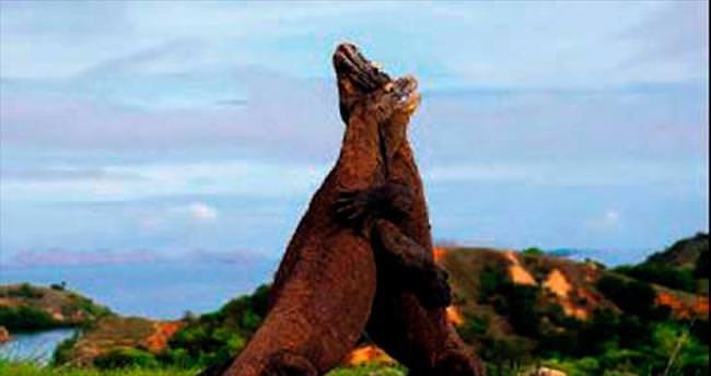 Jurassic Park değil ejderlerin savaşı