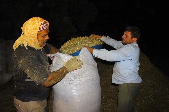 Çiftçiler Mesai Saatlerine Ramazan Ayarı Verdi