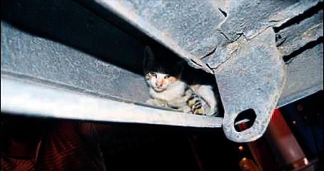 Aracın çamurluğuna giren kedi korkuttu