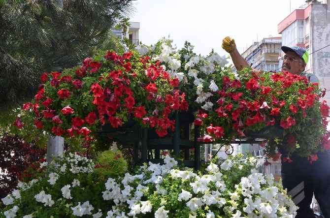 Zülfiye Çiçeklerine Özel Bakım
